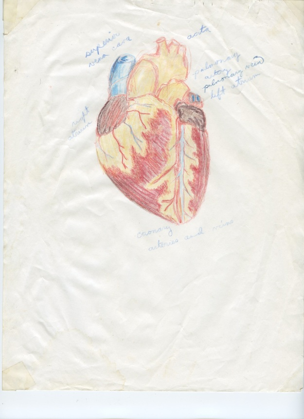 The Human Heart, 1988, Based on this image, my parents began to encouraging me to seek a career in medical illustration. I was only in 8th grade, but it was already becoming clear that getting me excited about their idea of a professional future was going to be an uphill trek.
